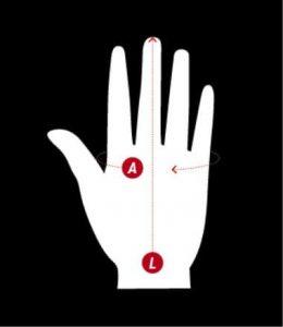 Mierzenie długości i obwodu dłoni